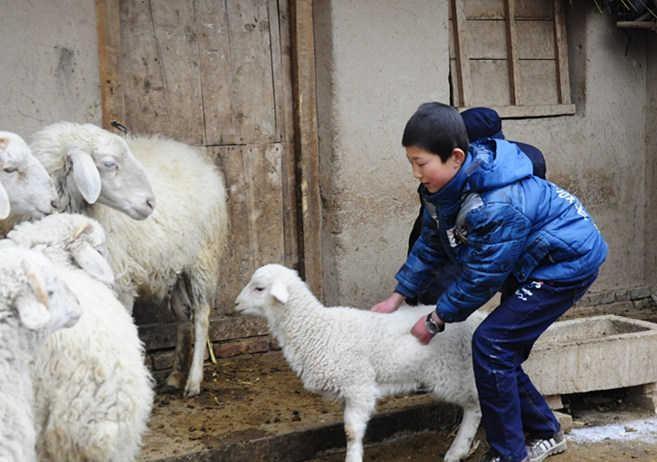 图为集善残疾儿童助养为受助儿童家庭配发羊羔